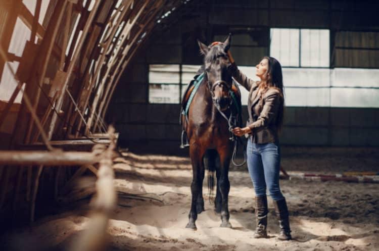 Reboque para Cavalo à Venda
